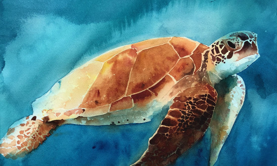 A watercolor panting of a turtle